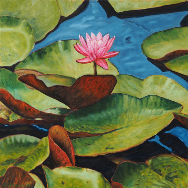 obraz Růžový květ nad hladinou
